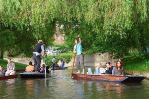 Punting through the willows